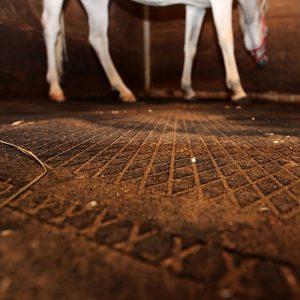 piastrella antitrauma per palestra e box cavalli